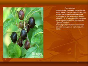 Смородина Многолетний кустарник, продолжитель- ность жизни 25-30 лет. Окраск