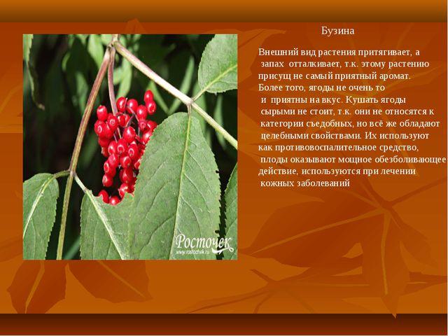 Бузина Внешний вид растения притягивает, а запах отталкивает, т.к. этому раст...