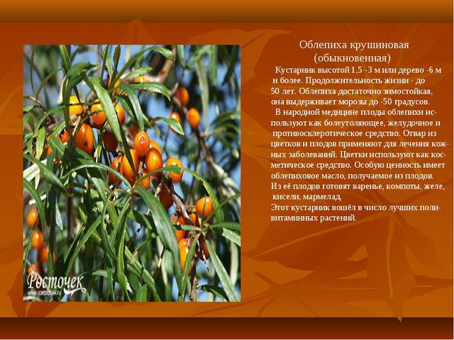 Облепиха крушиновая (обыкновенная) Кустарник высотой 1,5 -3 м или дерево -6...