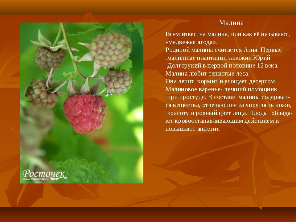 Малина Всем известна малина, или как её называют, «медвежья ягода». Родиной...