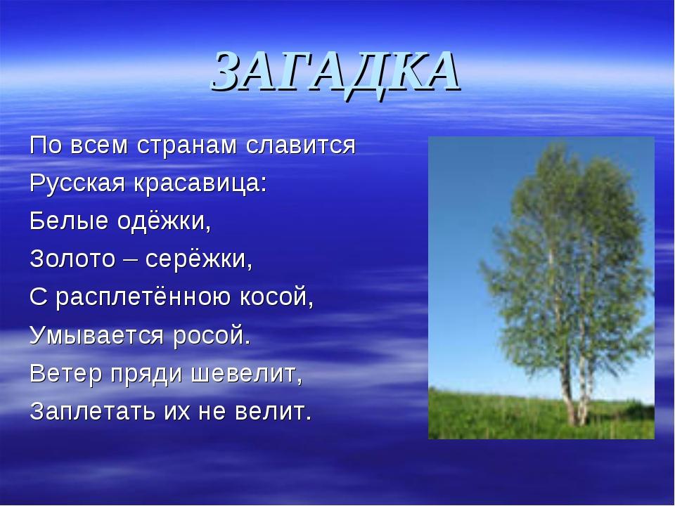 ЗАГАДКА По всем странам славится Русская красавица: Белые одёжки, Золото – се...