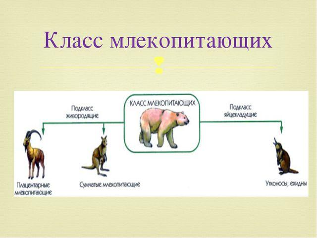 Класс млекопитающих 