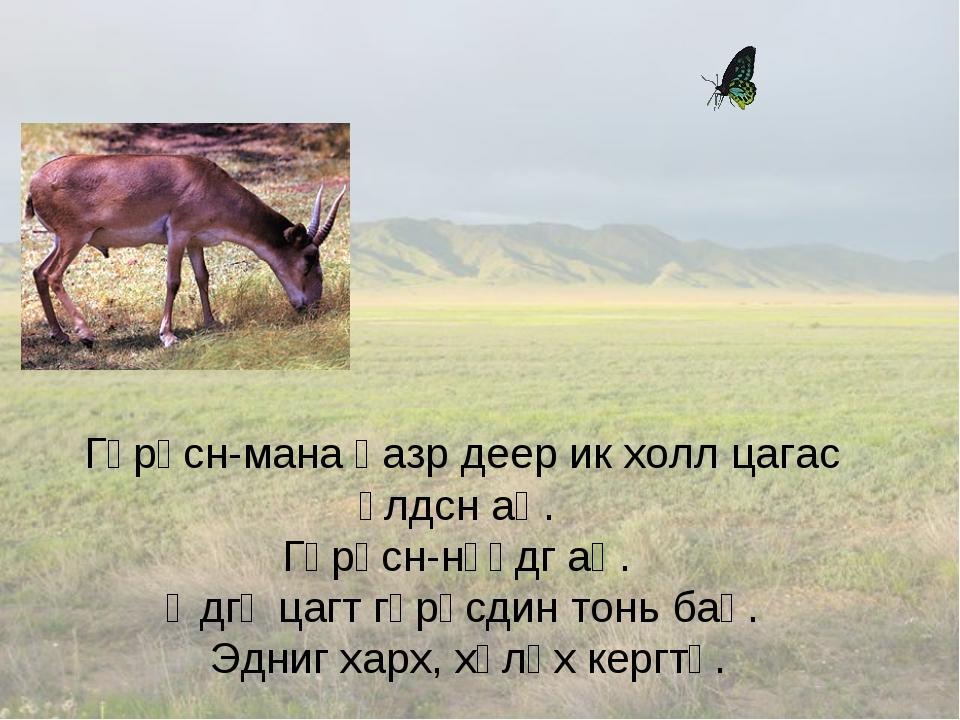 Гөрәсн-мана һазр деер ик холл цагас үлдсн аң. Гөрәсн-нүүдг аң. Өдгә цагт гөрә...