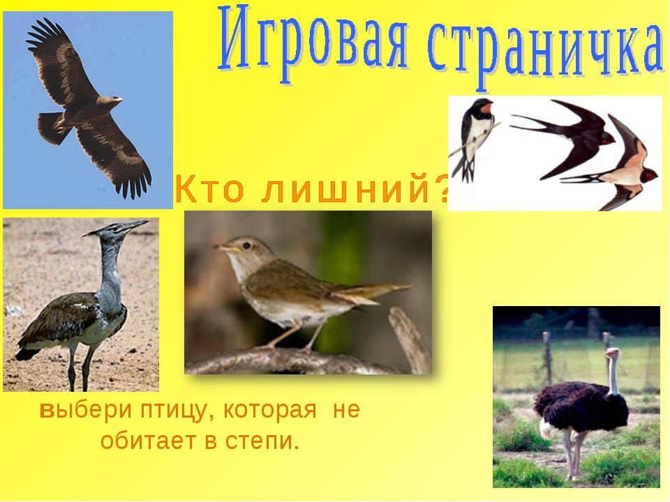 выбери птицу, которая не обитает в степи.