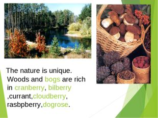 The nature is unique. Woods and bogs are rich in cranberry, bilberry,currant,
