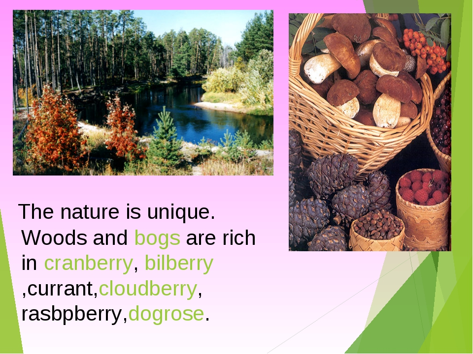 The nature is unique. Woods and bogs are rich in cranberry, bilberry,currant,...