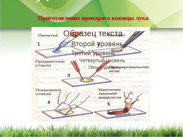 Приготовление препарата кожицы лука 1 2 3 4 5