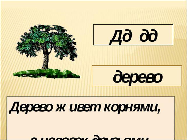 Дд дд дерево Дерево живет корнями, а человек друзьями.