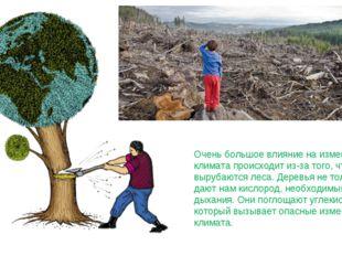 Очень большое влияние на изменение климата происходит из-за того, что вырубаю