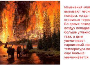 Изменения климата вызывают лесные пожары, когда горят огромные территории. Во