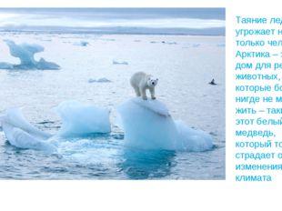 Таяние ледников угрожает не только человеку. Арктика – это дом для редких жив