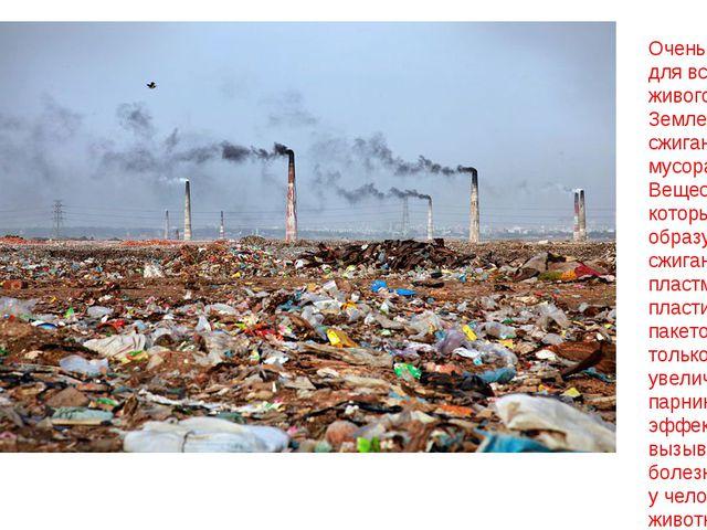 Очень опасно для всего живого на Земле сжигание мусора. Вещества, которые обр...