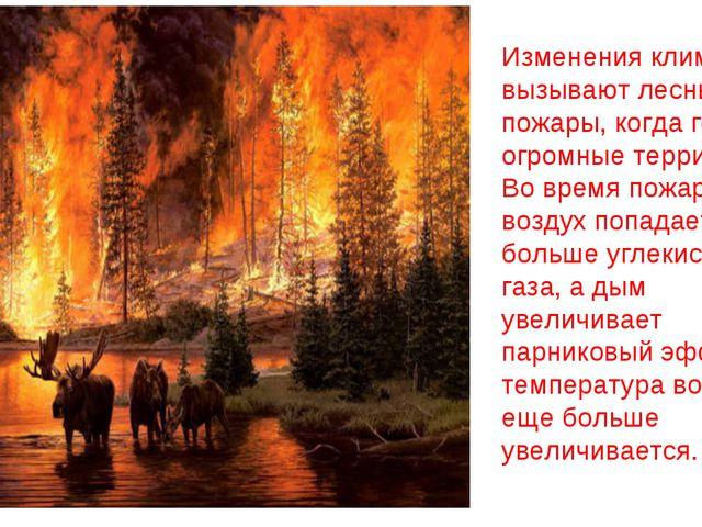 Изменения климата вызывают лесные пожары, когда горят огромные территории. Во...