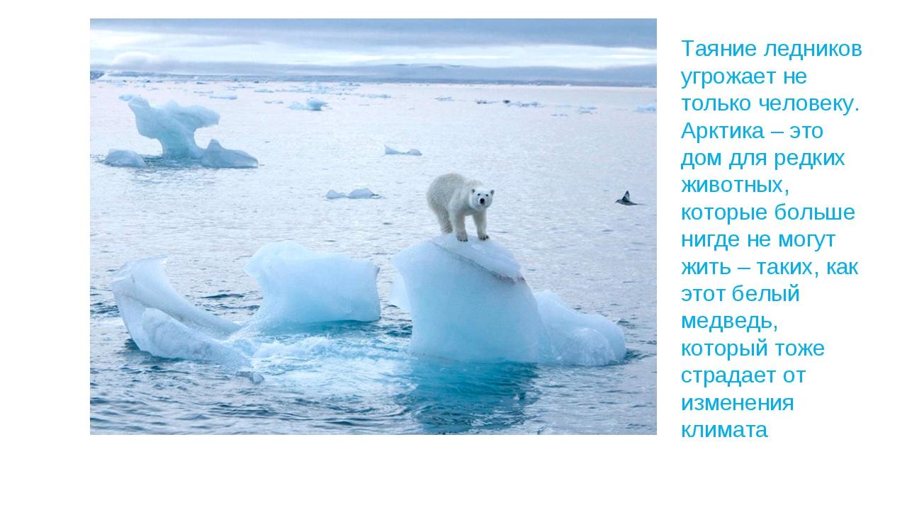 Таяние ледников угрожает не только человеку. Арктика – это дом для редких жив...