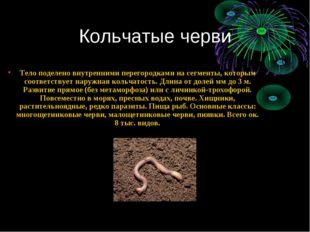 Кольчатые черви Тело поделено внутренними перегородками на сегменты, которым