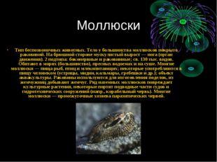Моллюски Тип беспозвоночных животных. Тело у большинства моллюсков покрыто ра