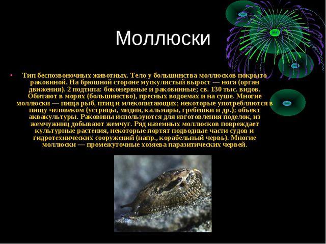 Моллюски Тип беспозвоночных животных. Тело у большинства моллюсков покрыто ра...