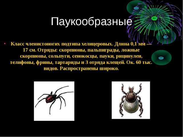 Паукообразные Класс членистоногих подтипа хелицеровых. Длина 0,1 мм — 17 см....