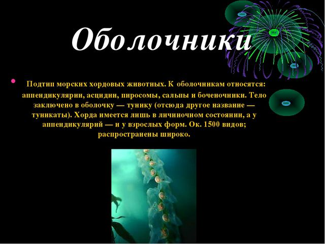 Оболочники Подтип морских хордовых животных. К оболочникам относятся: аппенди...