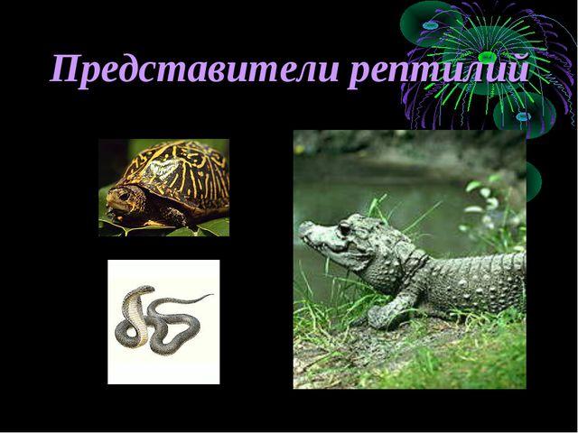 Представители рептилий