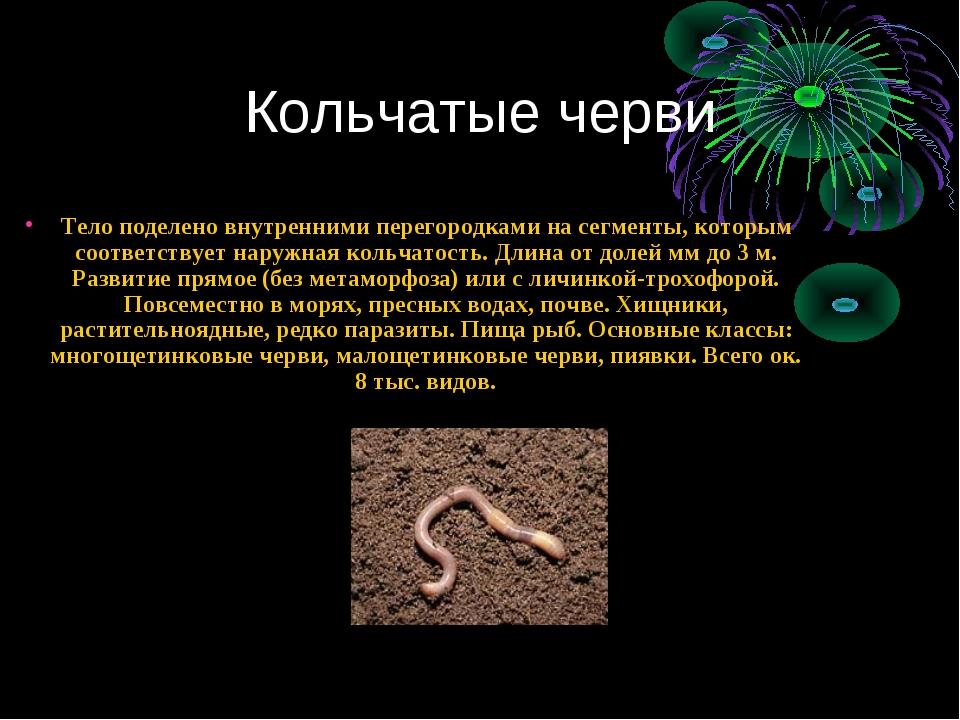 Кольчатые черви Тело поделено внутренними перегородками на сегменты, которым...