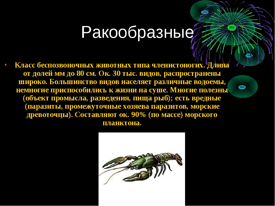 Ракообразные Класс беспозвоночных животных типа членистоногих. Длина от долей...