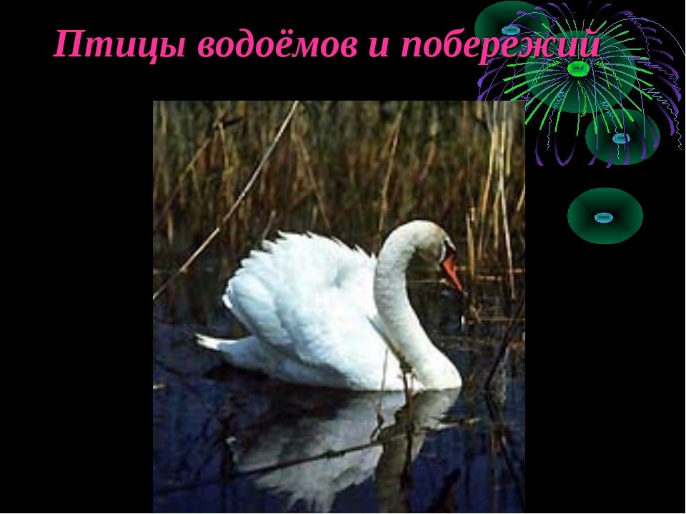 Птицы водоёмов и побережий