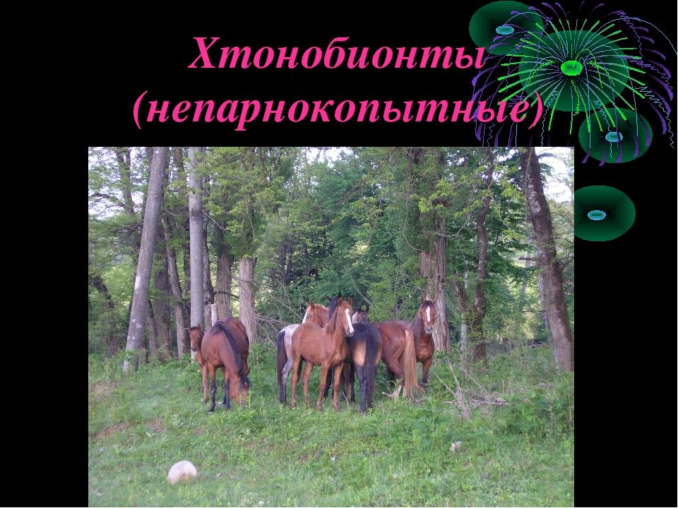 Хтонобионты (непарнокопытные)