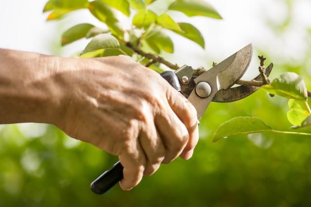 http://www.topnotchgarden.com/wp-content/uploads/hedge-pruning-pembrokeshire-640x425.jpg
