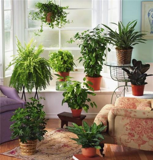 http://renoirflowers.com/img/cms/Plants/rasteniya_ochishausie_vozdux.jpg