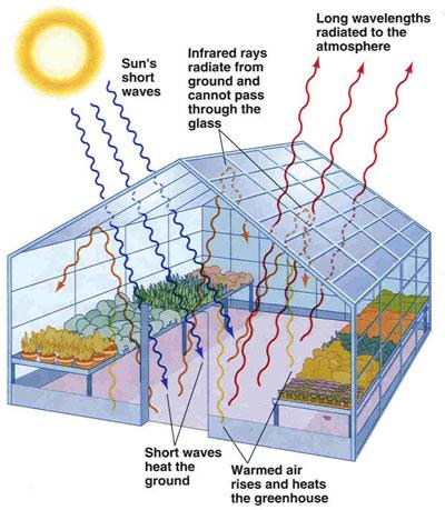 http://www.greenhousesonline.com.au/images/greenhouseeffects.jpg
