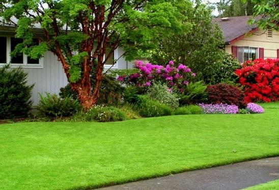 http://cadprograms.ru/uploads/posts/2012-02/1329759305_lawn-grass-01.jpg
