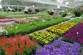 http://www.luddendenfoot.org.uk/Images/ClipArt/garden.jpg