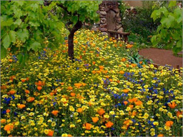 Мавританский газон - радуга цветов, праздник для глаз . Обсуждение на LiveInternet - Российский Сервис Онлайн-Дневников