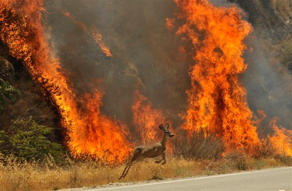 http://cgi.weather.com/web/multimedia/images/content/ap_wildfires_13.jpg