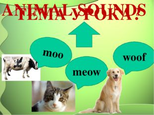 ANIMAL SOUNDS meow moo woof ТEМА УРОКА?