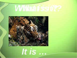 What is it? It is … What is it?