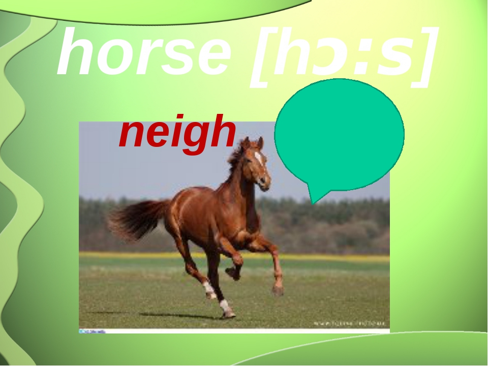 horse [hᴐ:s] neigh