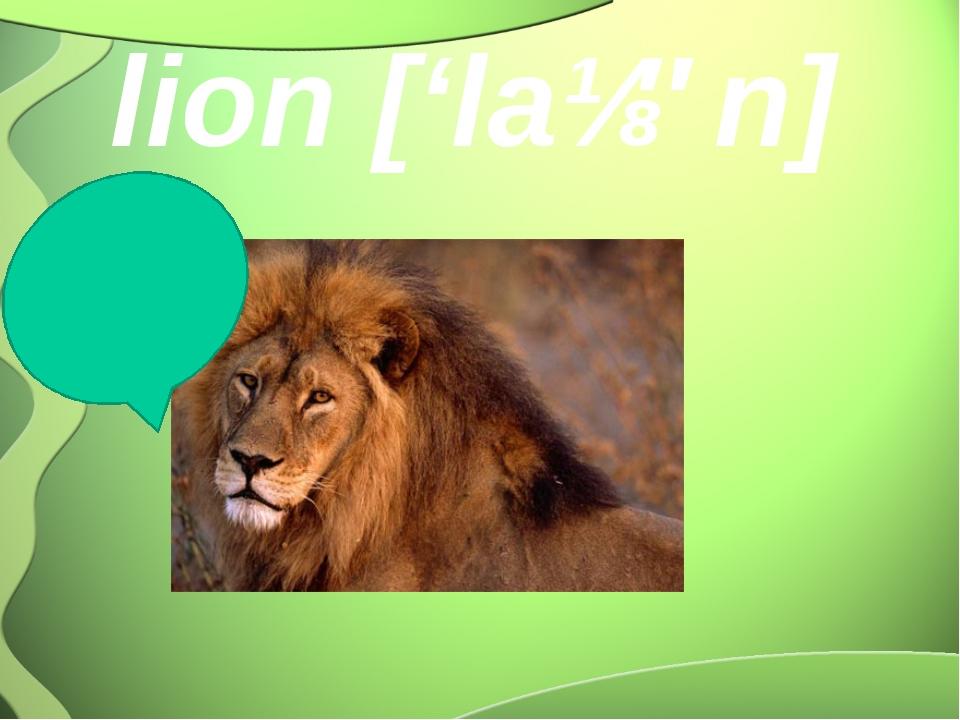lion ['laɪən] roar