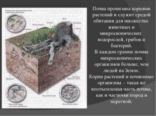 Почва пронизана корнями растений и служит средой обитания для множества живот