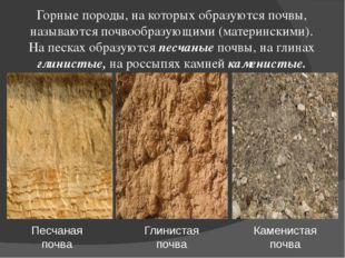 Горные породы, на которых образуются почвы, называются почвообразующими (мате