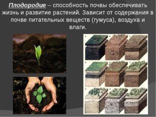 Плодородие – способность почвы обеспечивать жизнь и развитие растений. Зависи