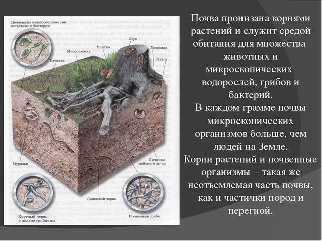 Почва пронизана корнями растений и служит средой обитания для множества живот...