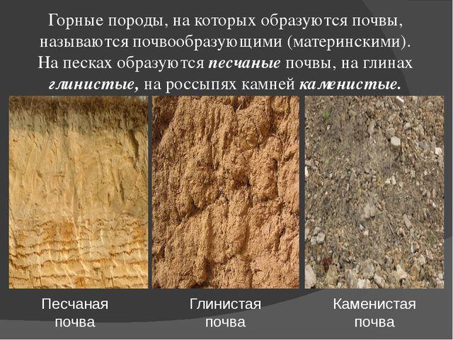 Горные породы, на которых образуются почвы, называются почвообразующими (мате...