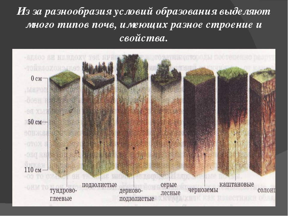 Из за разнообразия условий образования выделяют много типов почв, имеющих раз...