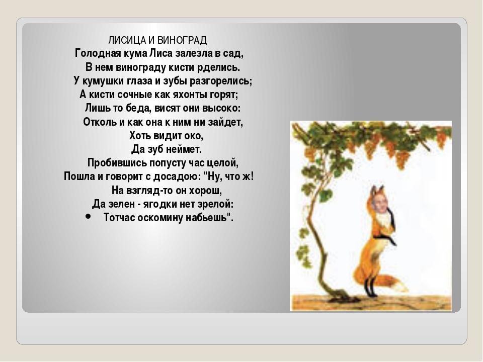 ЛИСИЦА И ВИНОГРАД Голодная кума Лиса залезла в сад,  В нем винограду кисти...