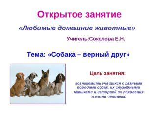 Открытое занятие «Любимые домашние животные» Учитель:Соколова Е.Н. Тема: «Соб