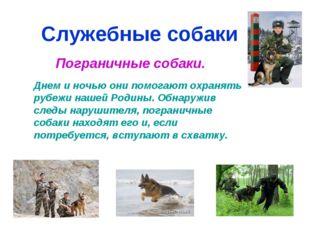Служебные собаки Пограничные собаки. Днем и ночью они помогают охранять рубеж