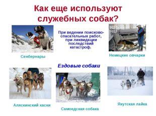 Как еще используют служебных собак? При ведении поисково-спасательных работ,