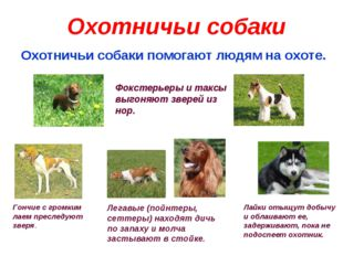 Охотничьи собаки Охотничьи собаки помогают людям на охоте. Фокстерьеры и такс